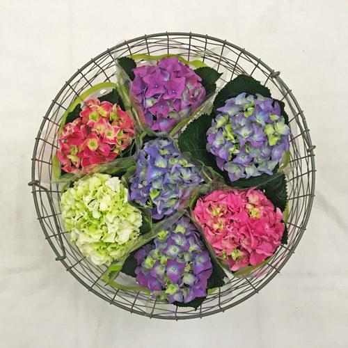 Fleurs-amanda-weybridge-Surrey-bouquets-10