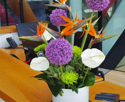 Fleurs-amanda-Surrey-Office-Flowers-5