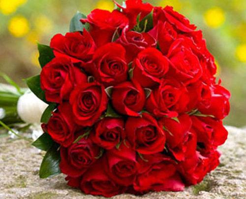Fleurs-amanda-Surrey-Valentine's-day-Red-Roses-24